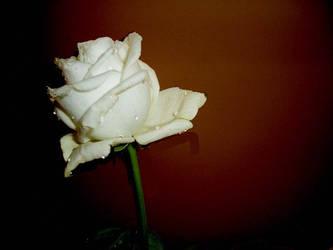 White Remembrance by Sliktor