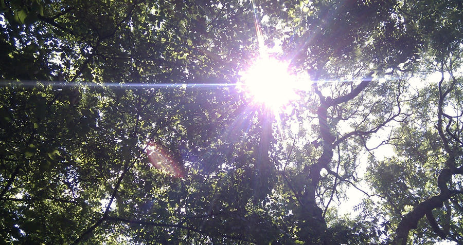 Sunlit canopy by Lovelyruthie