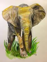 Elephant by Lovelyruthie