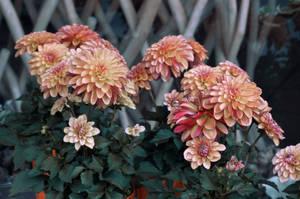 Flowers by kleinerteddy