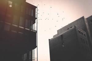 Bird by kleinerteddy