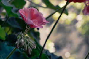 Pink Silence by kleinerteddy