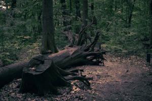 Path by kleinerteddy