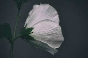 Florescence by kleinerteddy