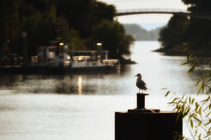Docks by kleinerteddy