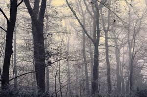 Gray Days by kleinerteddy