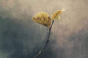 Autumn Mood by kleinerteddy