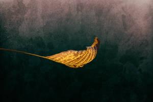 November Leaf by kleinerteddy