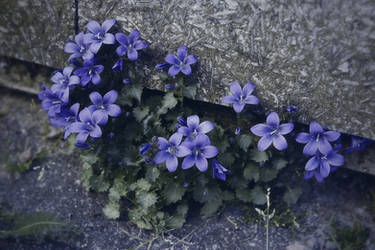Wall Flowers by kleinerteddy