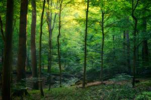 Green by kleinerteddy