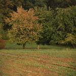 Hallo Autumn