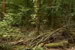 Through Forest