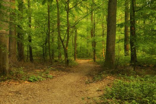 Deviation Path