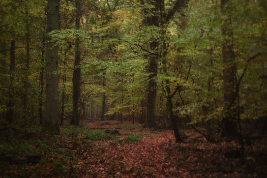 Witch Path