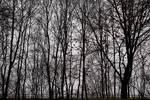 Last Trees