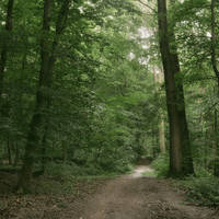 Love Path