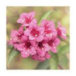 Pink September