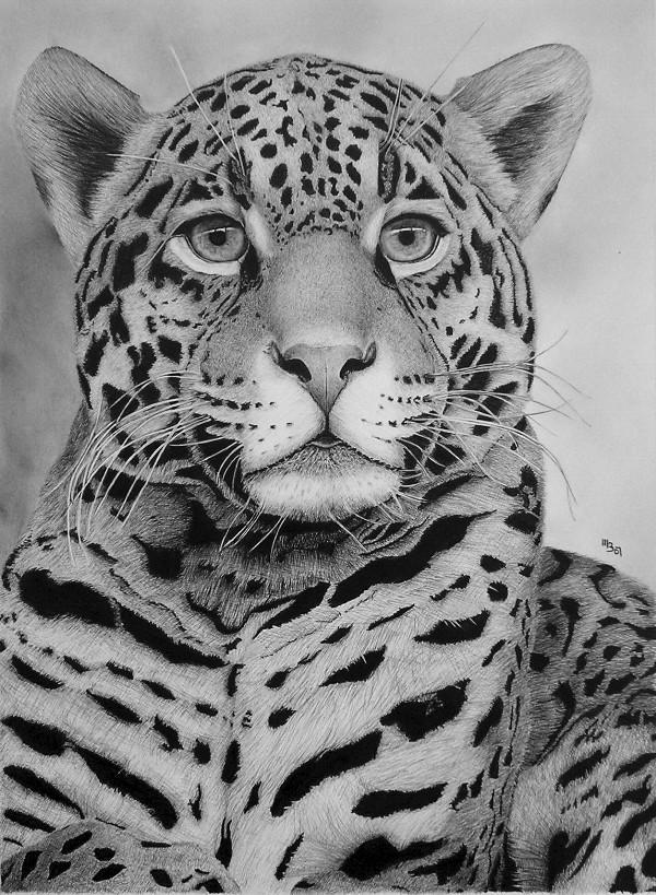 Nice Kitty IV. by Skoane