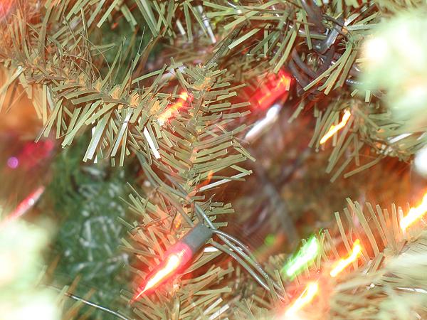 Image for Christmas Plants