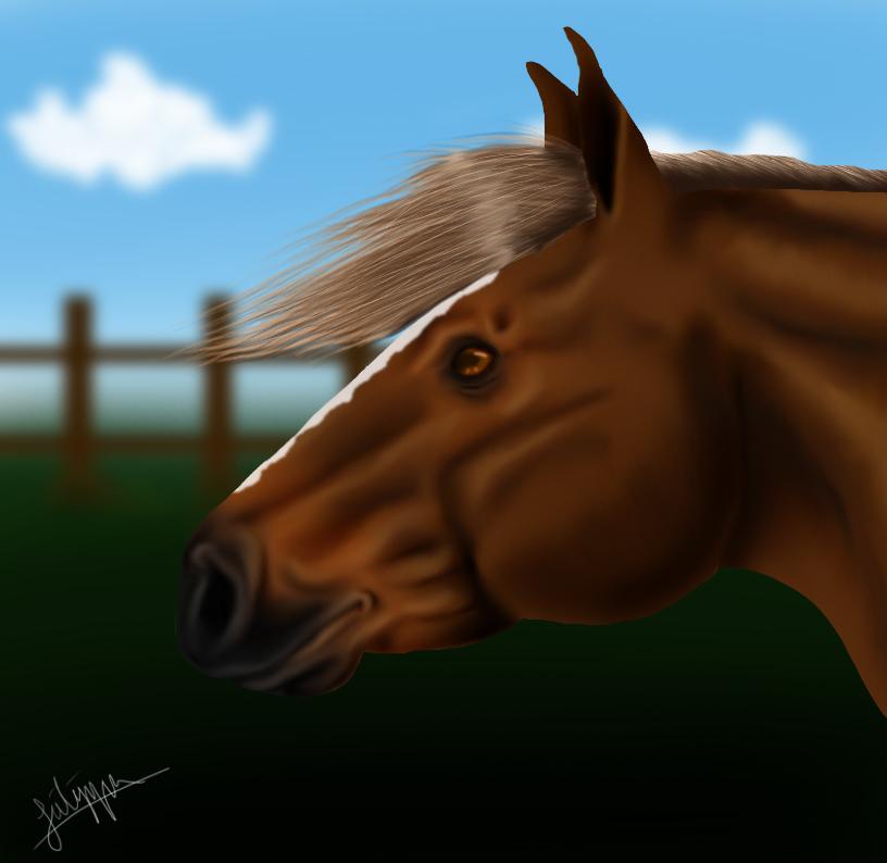 Pferd Test