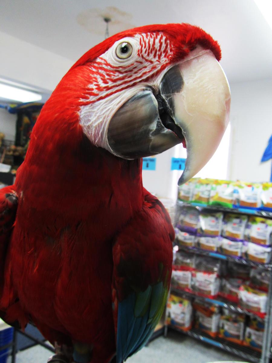 Talk About a Photogenic Bird by koshplappit