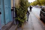 Hedge hunting