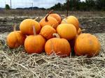 Pumpkins III