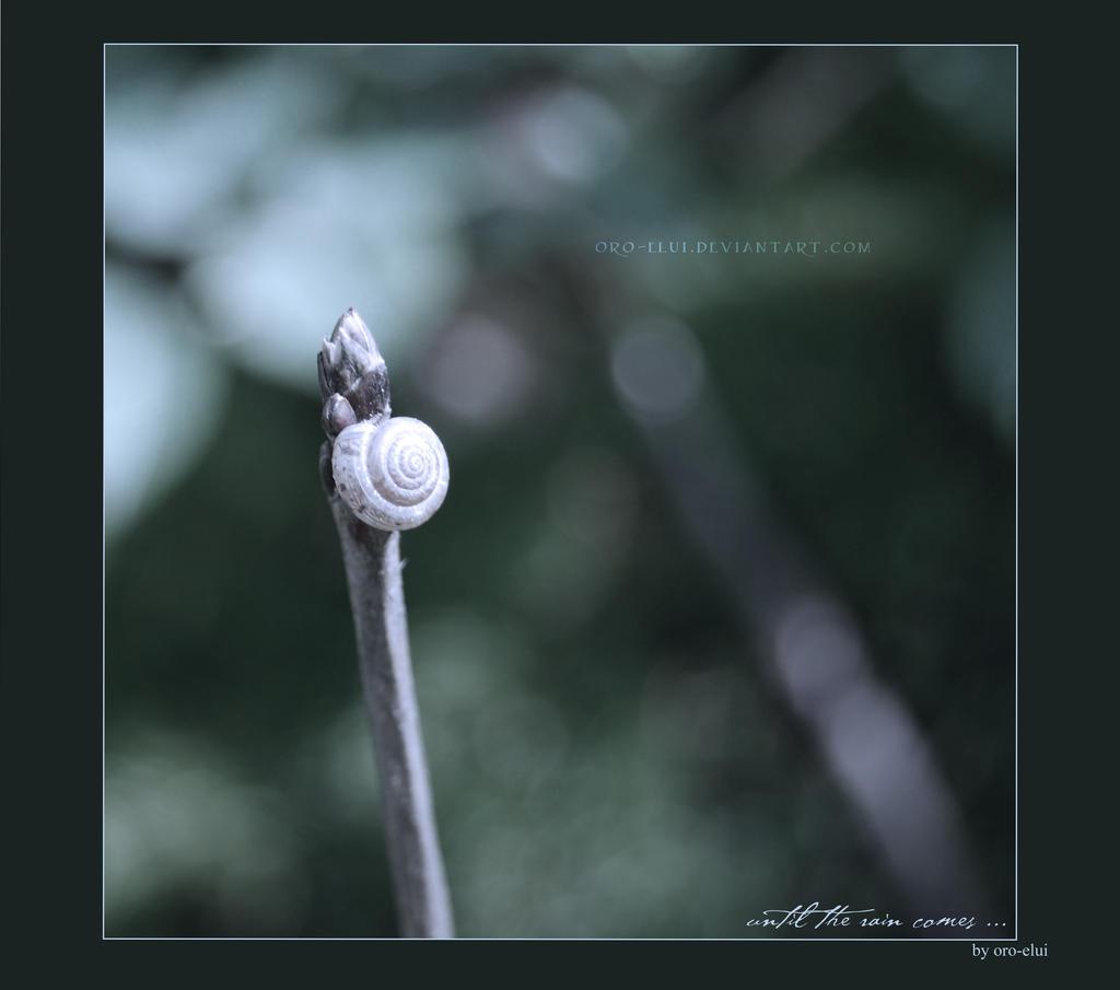 until the rain comes ... by oro-elui