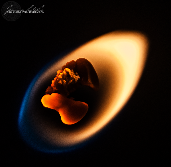 Fireflower. by oro-elui