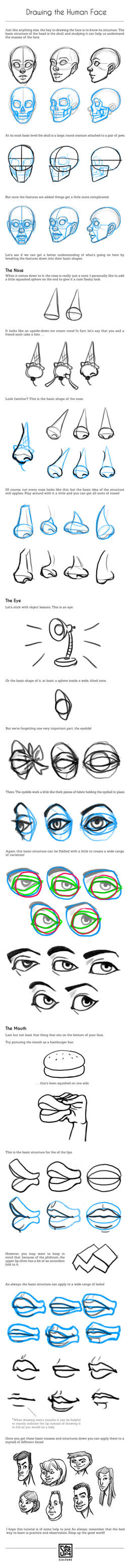 Drawing the Human Face Tutorial