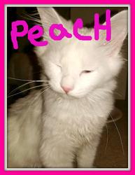 Peach232