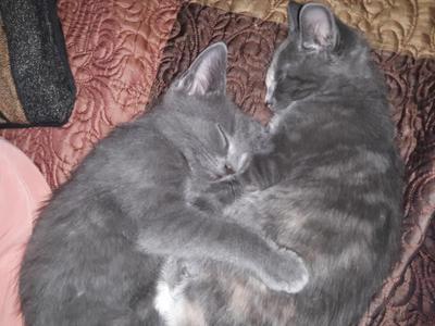Smokey and Molly