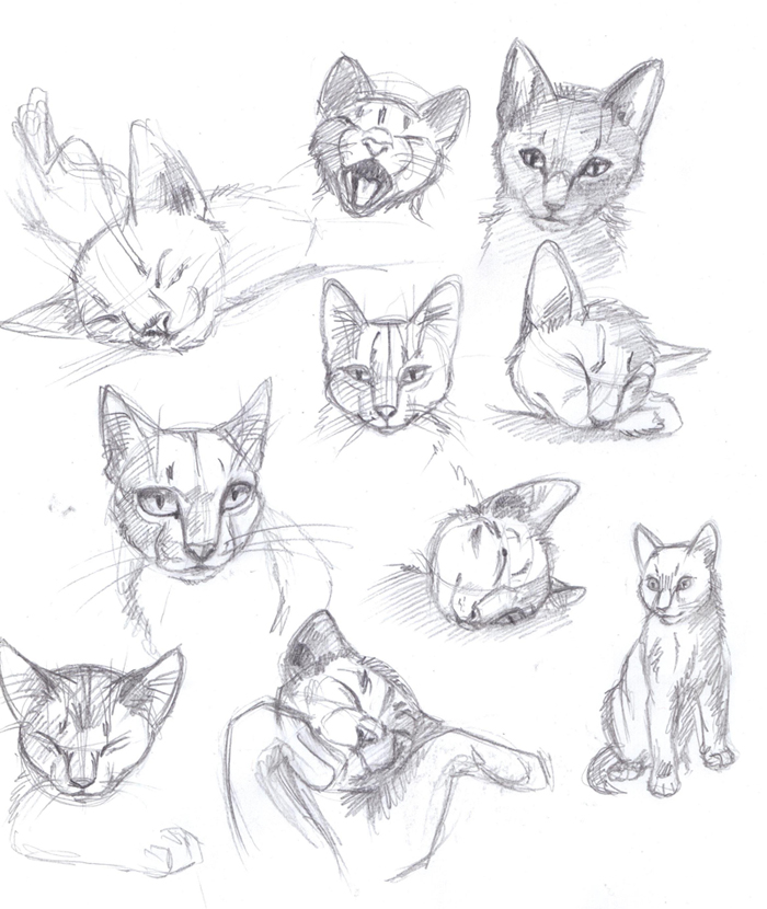Sketches Of Cats Image...