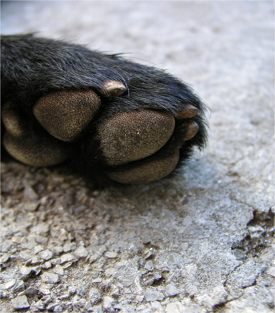 dog paw. by may-flower-smile