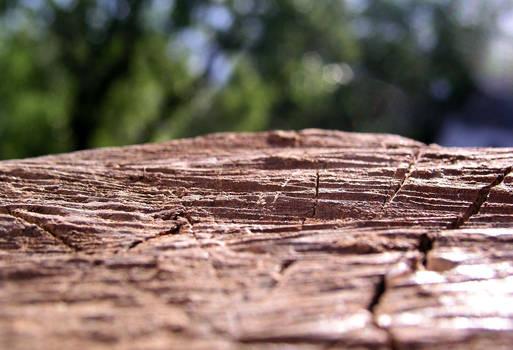 wooden steep cliffs