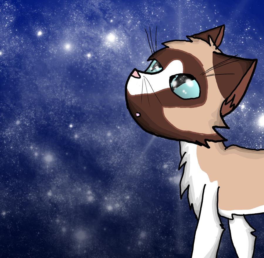 .:Stargazing:. Gift for WildpathOfShadowClan by DawnfireOfSkyClan
