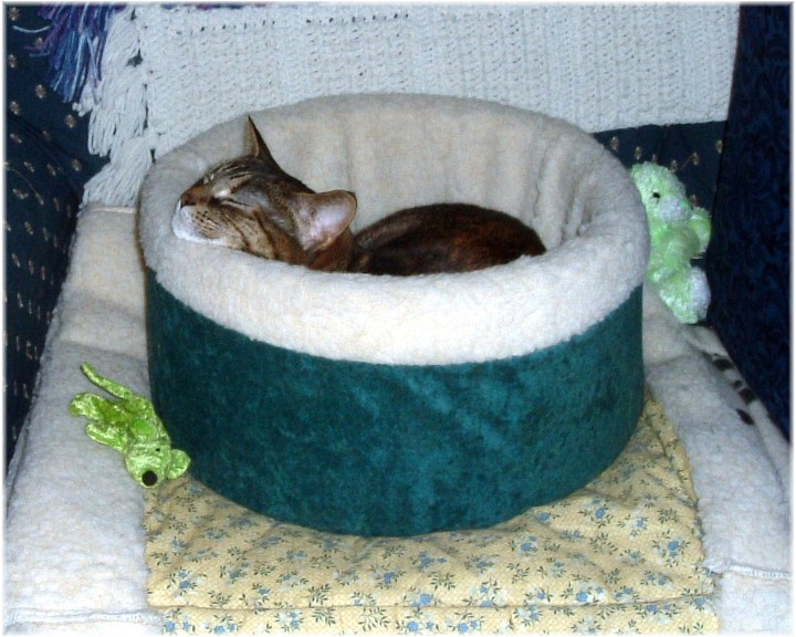 Tinkerbell - February 2008 by LindaLee
