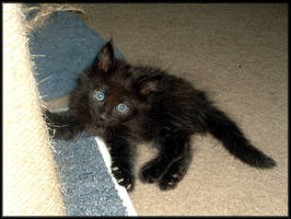 Kitten - 8 Weeks by LindaLee