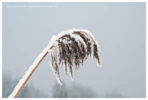 winterland macro 6 by priesteres-stock