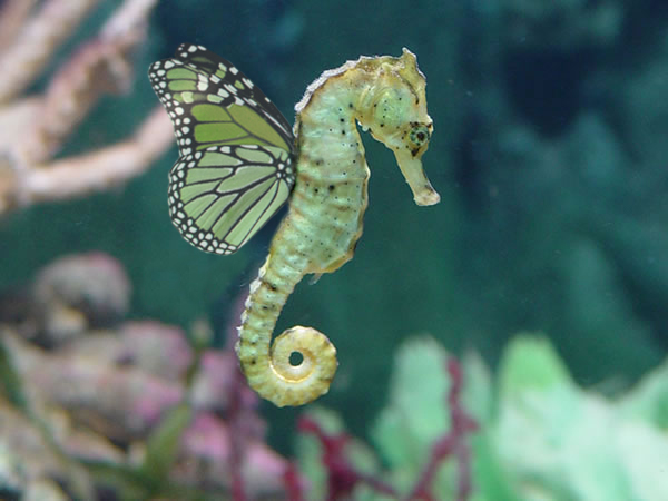 Butter horsefly seahorse by oblivion99 on deviantart for Is a seahorse a fish