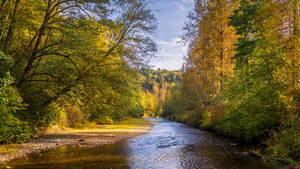Early fall colors on the Pilchuck river