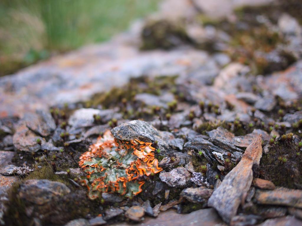Lichen by bitterologist