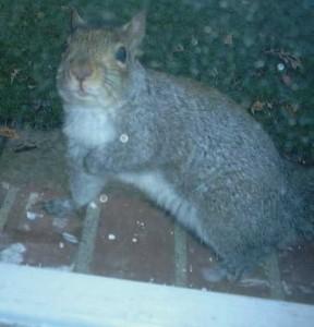 ponycowsquirrel's Profile Picture