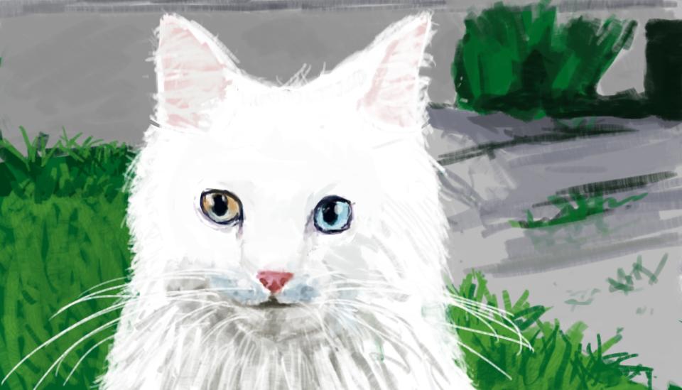 cat by Lixzia