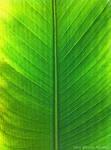 Green by AhmedMadhi