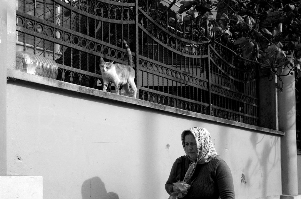 Nine Lives By Ziaulkareem by ZiaulKareem