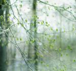 frail by henwen