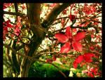 My Tree II