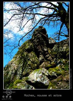 Roches, mousse et arbre