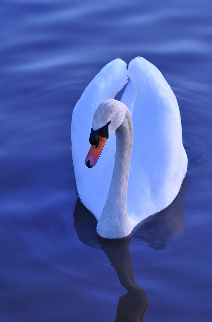 swan lake chat Home » chat » the tea rooms » swan lake or maybe not  swan lake or maybe not  chat say hello to your fellow members or ask questions about this community here rss.